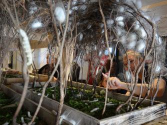 L'incroyable cycle du ver à soie au Musée-Magannerie de Lagorce
