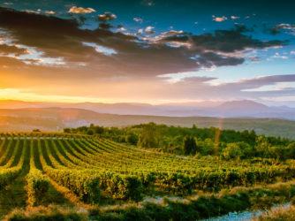 La vigne façonne les paysages du Sud Ardèche