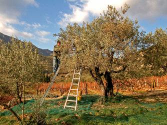 L'automne en Sud Ardèche